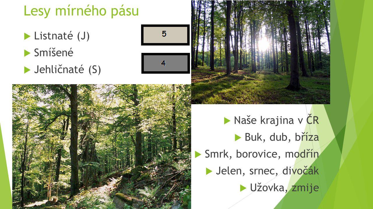 Lesy mírného pásu  Listnaté (J)  Smíšené  Jehličnaté (S)  Naše krajina v ČR  Buk, dub, bříza  Smrk, borovice, modřín  Jelen, srnec, divočák  U