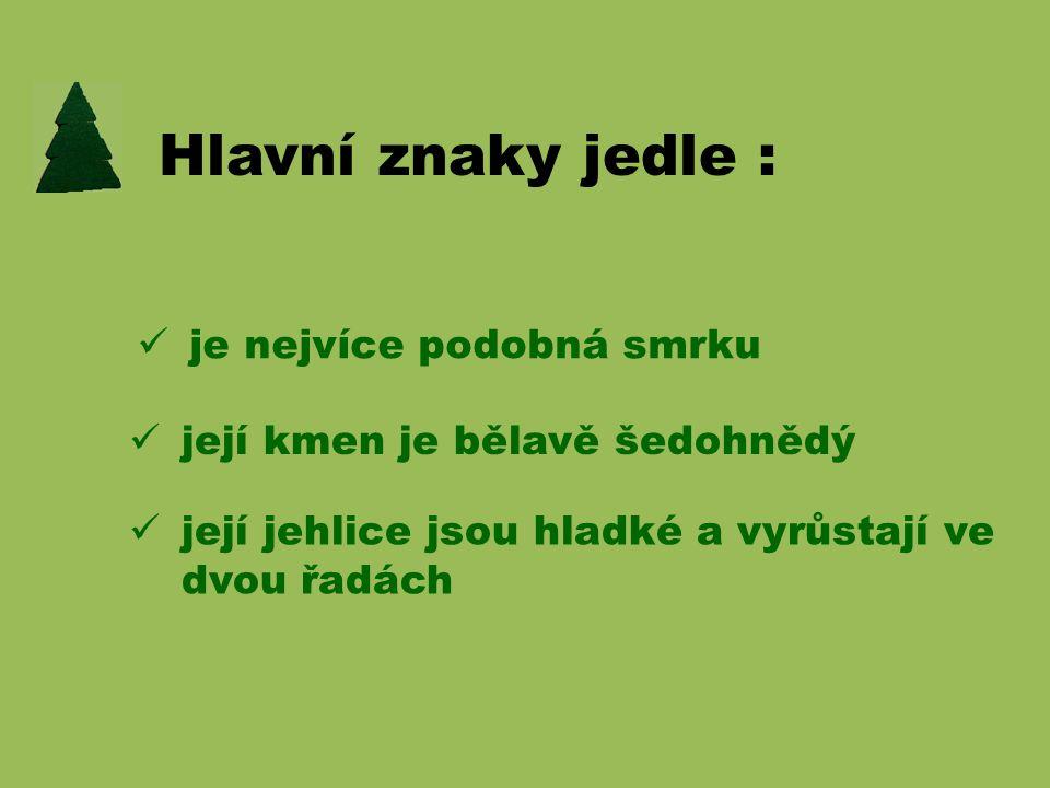 JEDLE BĚLOKORÁ
