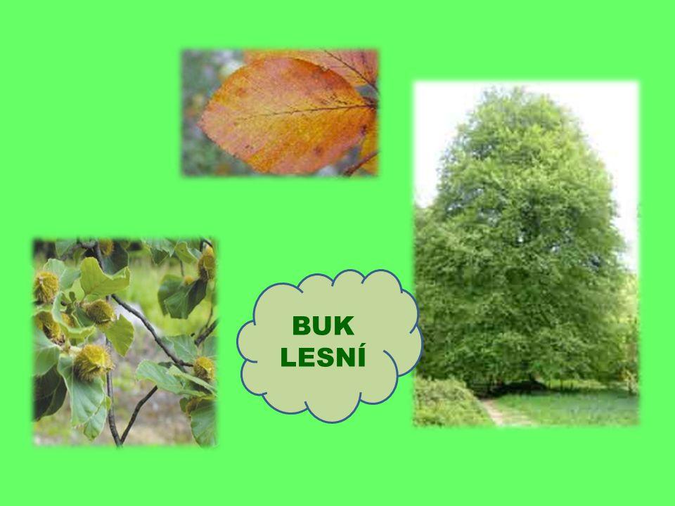 Hlavní znaky dubu : jeho lupeny jsou laločnaté plod se nazývá žalud jeho kořeny jsou dlouhé- odolají i vichřici dožívá se vysokého věku- až 1 000 let