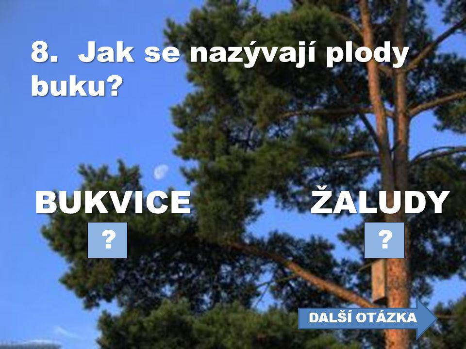 7. Listnatý strom s bílou kůrou (bílý kmen) se jmenuje… BŘÍZABUK ? ? DALŠÍ OTÁZKA