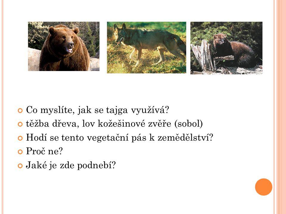 Co myslíte, jak se tajga využívá? těžba dřeva, lov kožešinové zvěře (sobol) Hodí se tento vegetační pás k zemědělství? Proč ne? Jaké je zde podnebí?