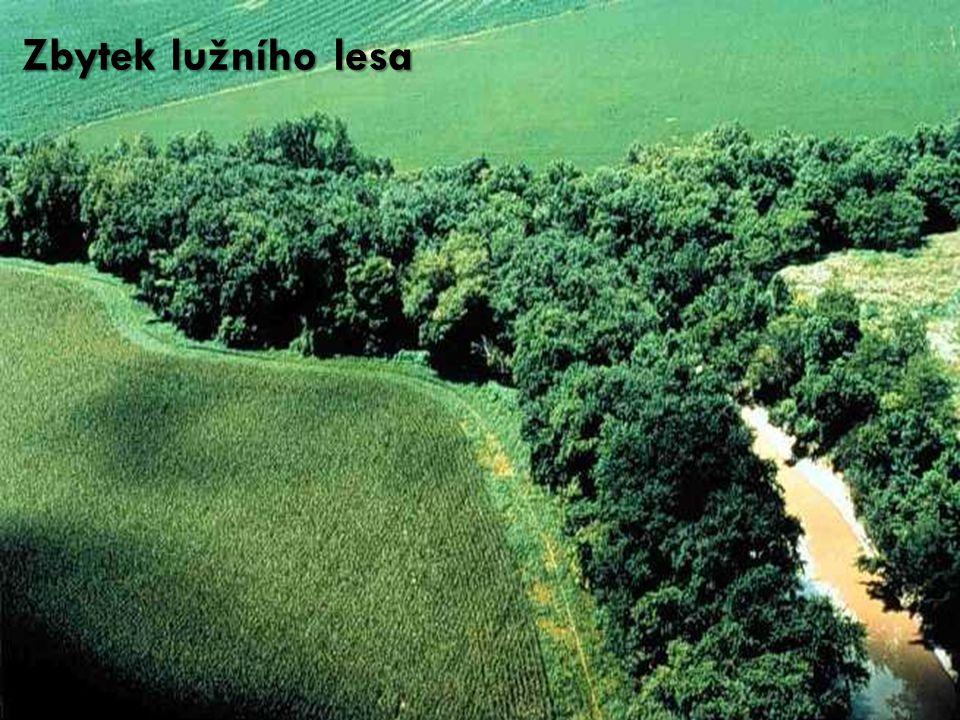 Zbytek lužního lesa