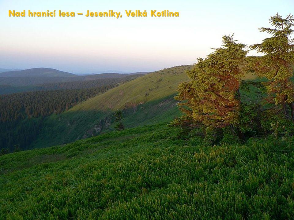 Nad hranicí lesa – Jeseníky, Velká Kotlina