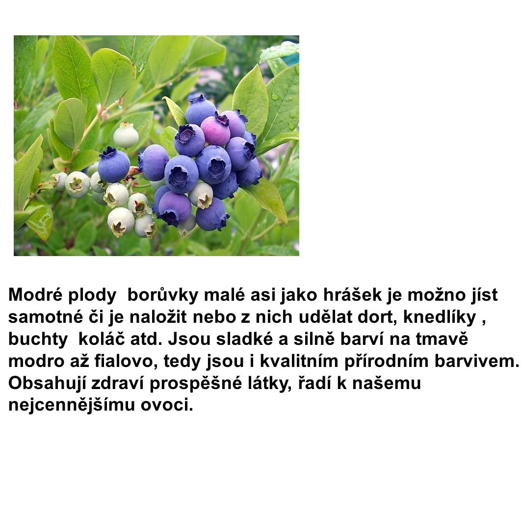 Modré plody borůvky malé asi jako hrášek je možno jíst samotné či je naložit nebo z nich udělat dort, knedlíky, buchty koláč atd. Jsou sladké a silně