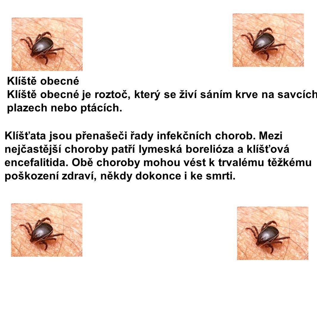 Klíště obecné Klíště obecné je roztoč, který se živí sáním krve na savcích, plazech nebo ptácích. Klíšťata jsou přenašeči řady infekčních chorob. Mezi