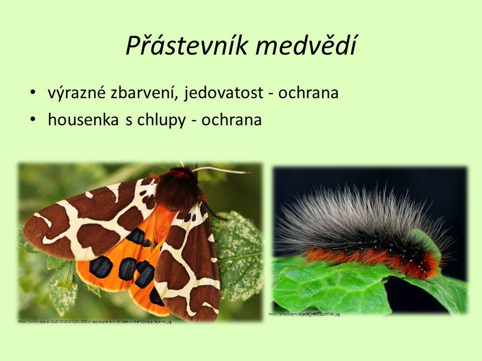 Přástevník medvědí výrazné zbarvení, jedovatost - ochrana housenka s chlupy - ochrana http://www.leps.sk/SLOVENSKA%20VERZIA/Lepidoptera/Arctiidae/Arct