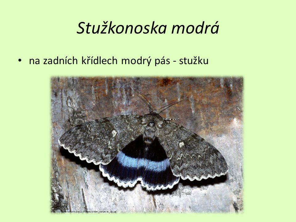 Stužkonoska modrá na zadních křídlech modrý pás - stužku http://www.hantsmoths.org.uk/images/clifden_nonpariel_dg.jpg