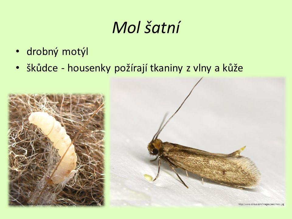Mol šatní drobný motýl škůdce - housenky požírají tkaniny z vlny a kůže http://www.cirbus.com/images/pest/mol1.jpghttp://upload.wikimedia.org/wikipedi