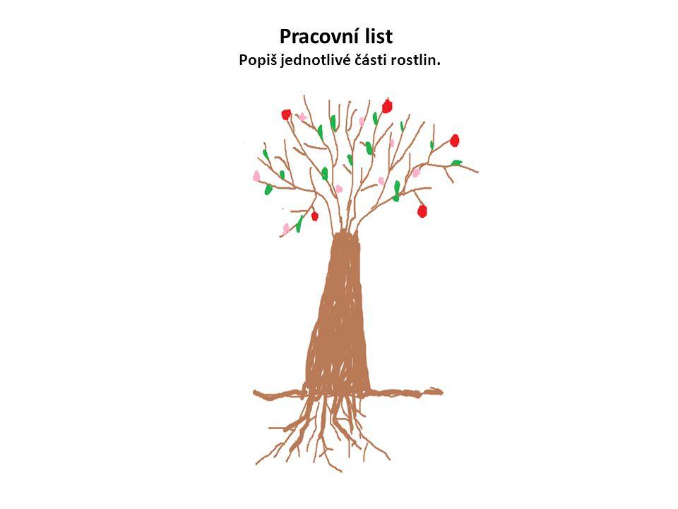 Pracovní list Popiš jednotlivé části rostlin.