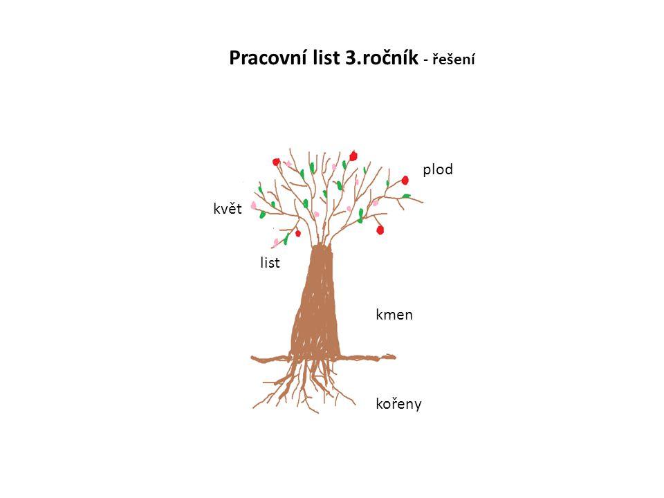 plod květ kmen kořeny list Pracovní list 3.ročník - řešení