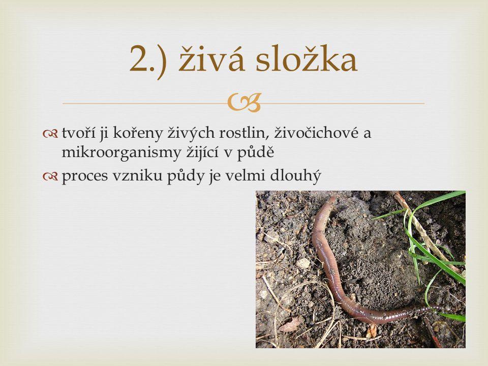   tvoří ji kořeny živých rostlin, živočichové a mikroorganismy žijící v půdě  proces vzniku půdy je velmi dlouhý 2.) živá složka