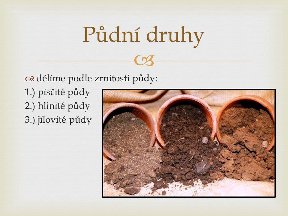   dělíme podle zrnitosti půdy: 1.) písčité půdy 2.) hlinité půdy 3.) jílovité půdy Půdní druhy