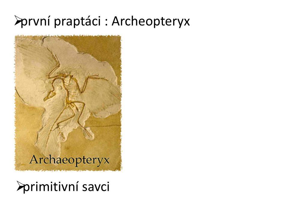  první praptáci : Archeopteryx  primitivní savci