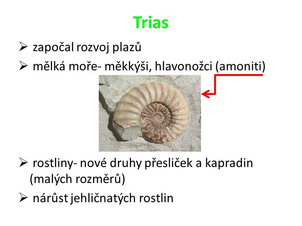 Trias  započal rozvoj plazů  mělká moře- měkkýši, hlavonožci (amoniti)  rostliny- nové druhy přesliček a kapradin (malých rozměrů)  nárůst jehličn