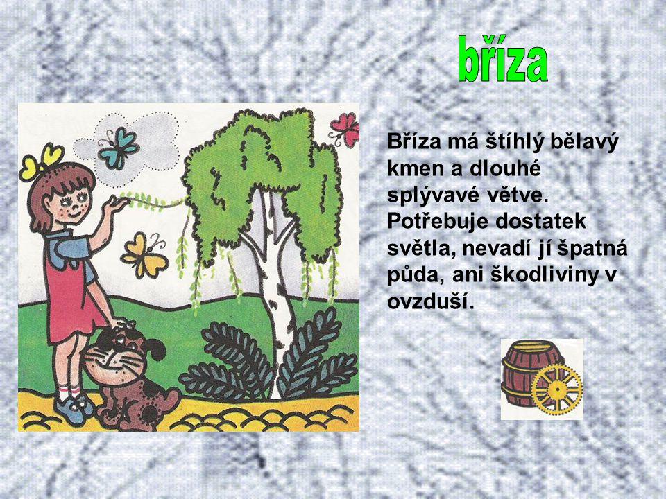 Borovice neboli sosna je jehličnatý strom, který roste téměř všude. Snese dobře sucho, ale i mráz. Její kmen bývá pokroucený.
