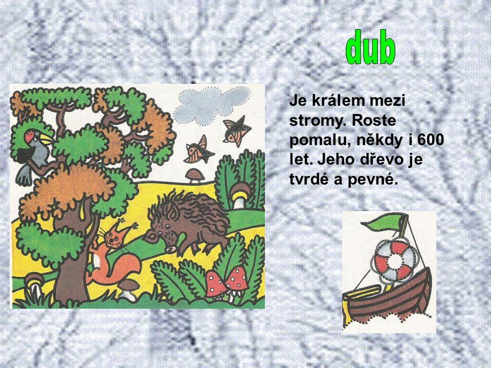Bříza má štíhlý bělavý kmen a dlouhé splývavé větve. Potřebuje dostatek světla, nevadí jí špatná půda, ani škodliviny v ovzduší.