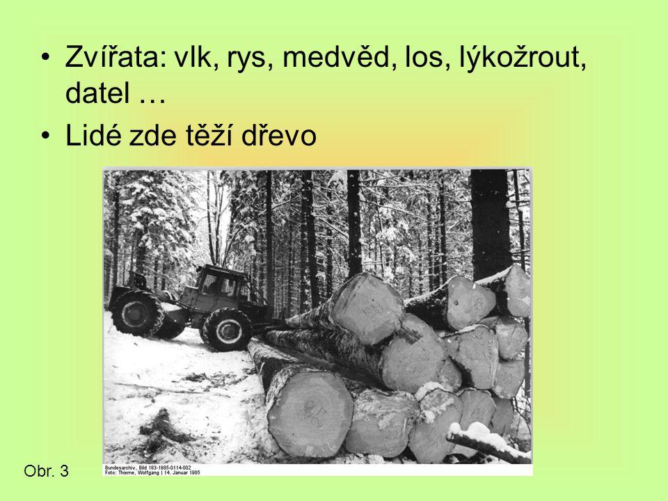 Zvířata: vlk, rys, medvěd, los, lýkožrout, datel … Lidé zde těží dřevo Obr. 3