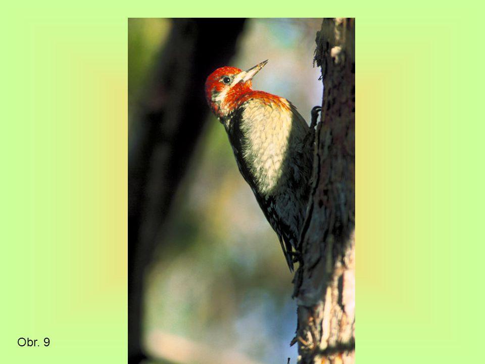 Smíšené a listnaté lesy mírného pásu Navazují na tajgu a směrem k rovníku převažují listnaté stromy Úrodnější půdy – kambizemě Co se především podílí na tvorbě humusu Přírodní krajina ČR Povídej o naší přírodě