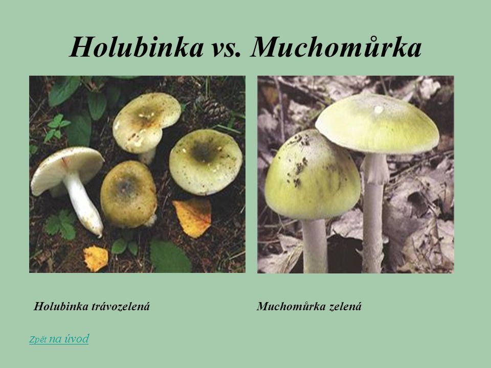 Holubinka vs. Muchomůrka Holubinka trávozelená Muchomůrka zelená Zpět na úvod