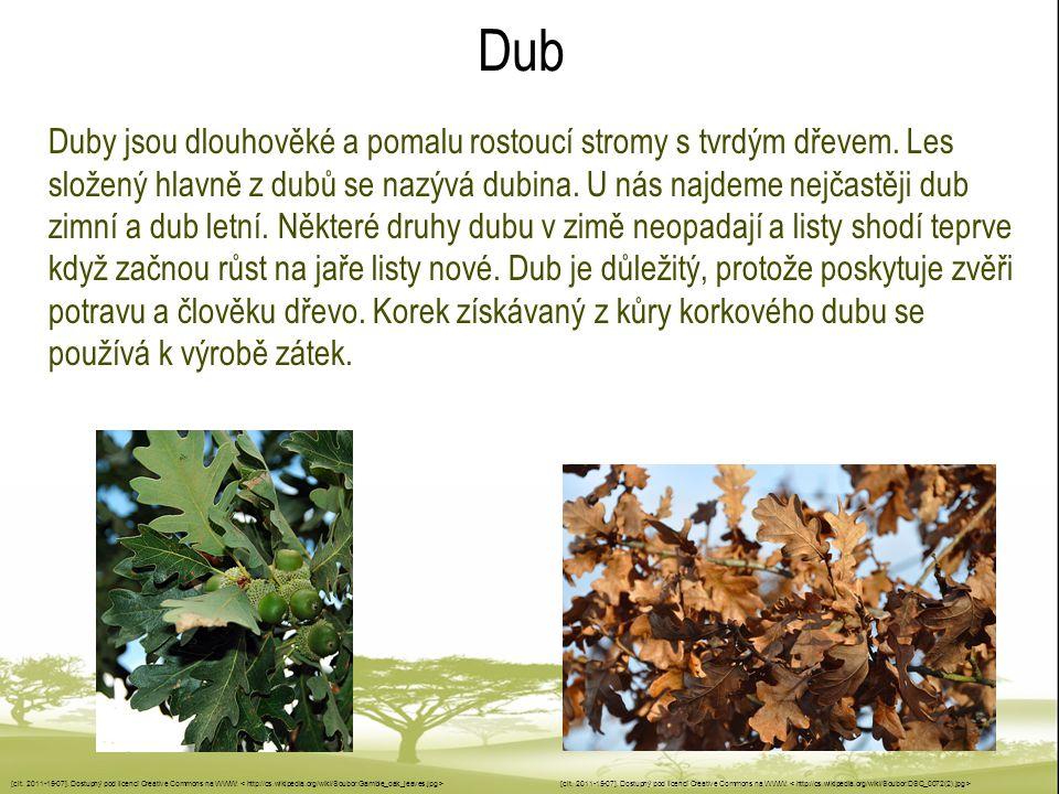 Dub Duby jsou dlouhověké a pomalu rostoucí stromy s tvrdým dřevem. Les složený hlavně z dubů se nazývá dubina. U nás najdeme nejčastěji dub zimní a du