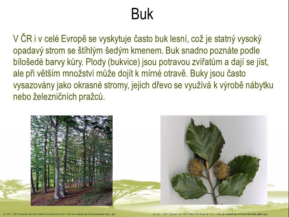 Buk V ČR i v celé Evropě se vyskytuje často buk lesní, což je statný vysoký opadavý strom se štíhlým šedým kmenem. Buk snadno poznáte podle bílošedé b