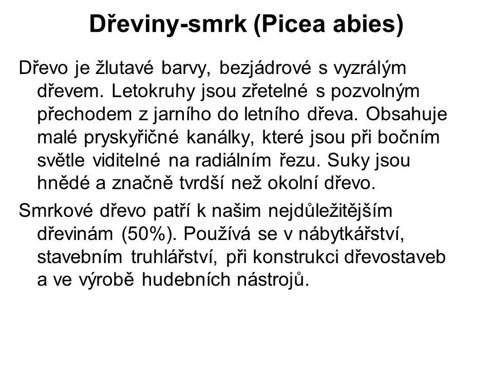 Dřeviny-smrk (Picea abies) Obr.7Obr.8