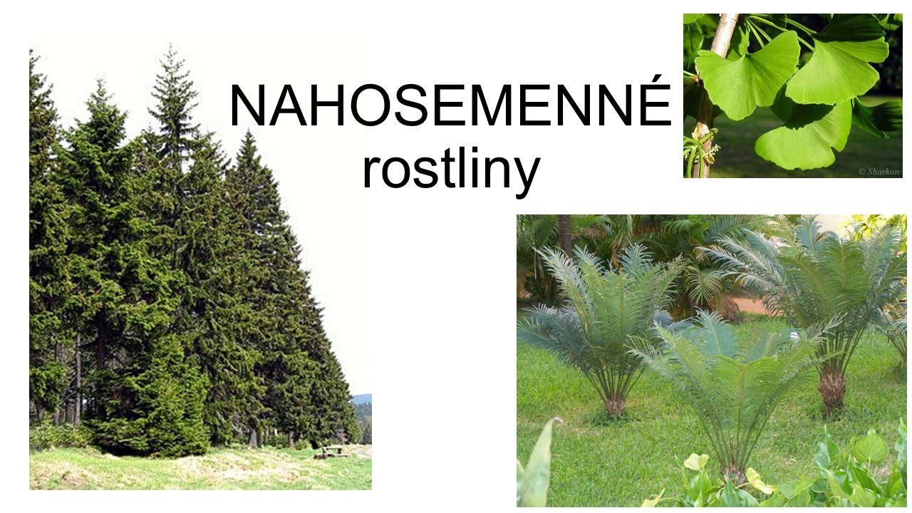 NAHOSEMENNÉ rostliny