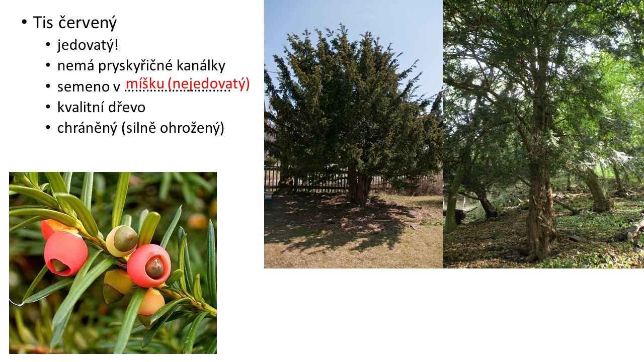 Tis červený jedovatý! nemá pryskyřičné kanálky semeno v ……………………….. kvalitní dřevo chráněný (silně ohrožený) míšku (nejedovatý)