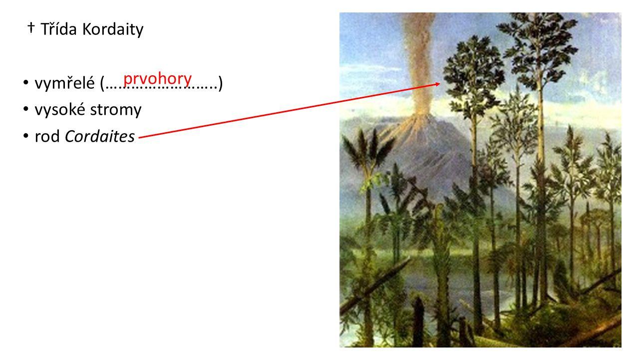 † Třída Kordaity vymřelé (……………………..) vysoké stromy rod Cordaites prvohory
