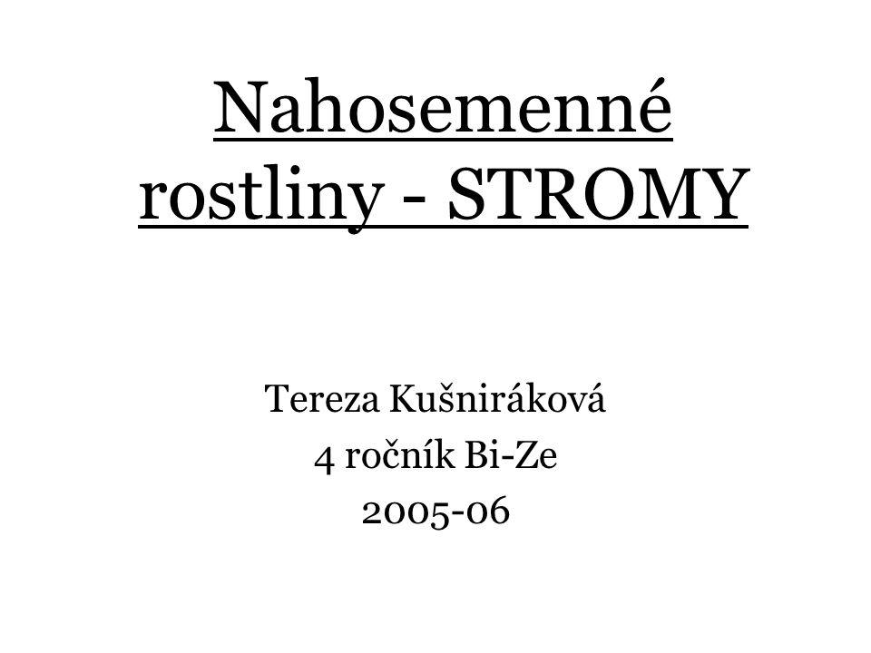 Nahosemenné rostliny - STROMY Tereza Kušniráková 4 ročník Bi-Ze 2005-06