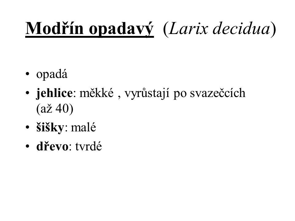 Modřín opadavý (Larix decidua) opadá jehlice: měkké, vyrůstají po svazečcích (až 40) šišky: malé dřevo: tvrdé