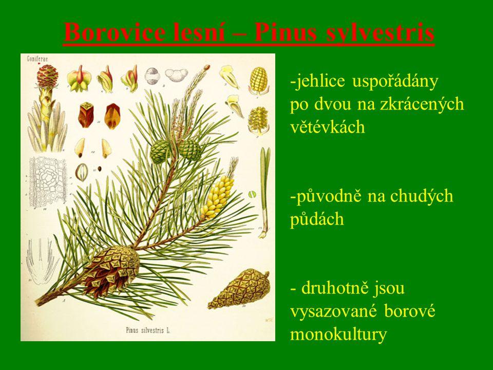 Borovice lesní – Pinus sylvestris -jehlice uspořádány po dvou na zkrácených větévkách -původně na chudých půdách - druhotně jsou vysazované borové monokultury