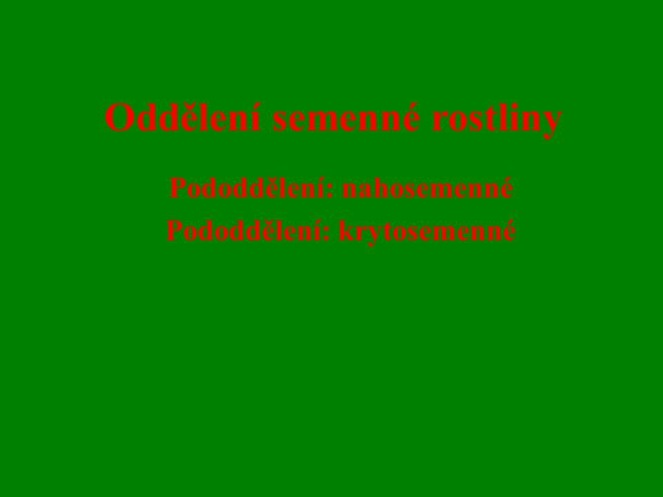 Oddělení semenné rostliny Pododdělení: nahosemenné Pododdělení: krytosemenné