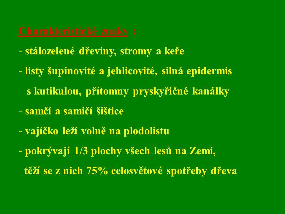Charakteristické znaky : - stálozelené dřeviny, stromy a keře - listy šupinovité a jehlicovité, silná epidermis s kutikulou, přítomny pryskyřičné kaná