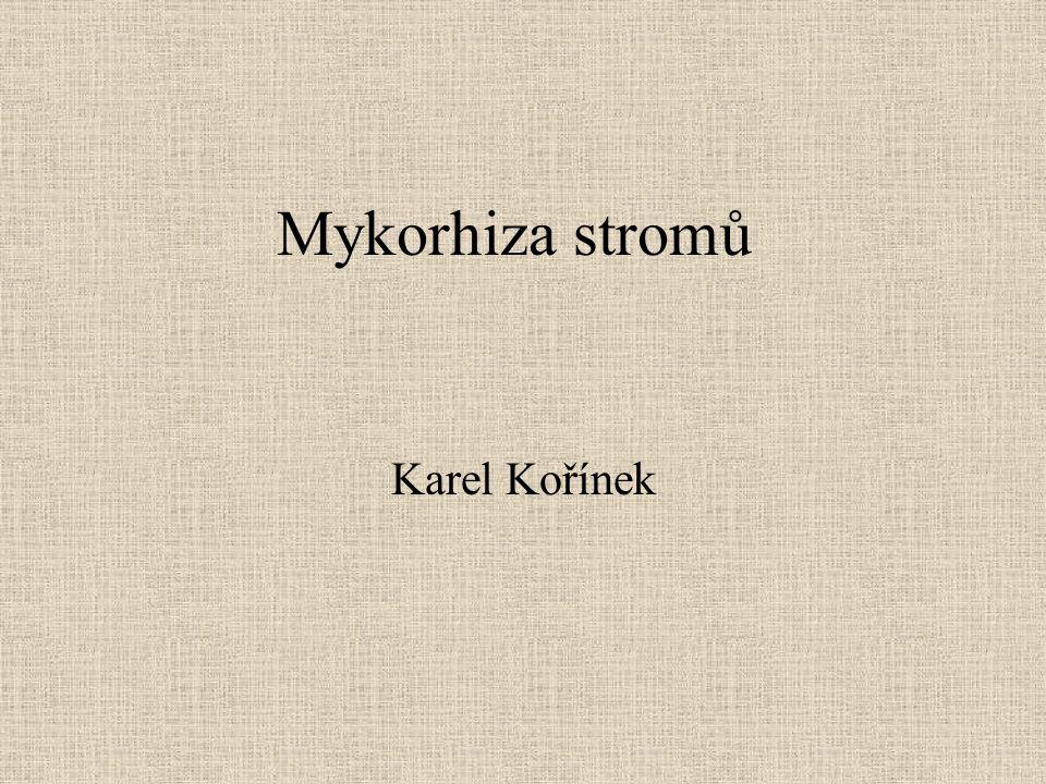 Mykorhiza Mykorhiza je těsné morfologické spojení mezi houbou (mykobiontem) a rostlinou (fykobiontem).