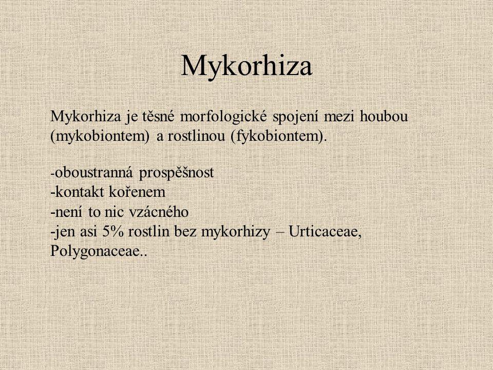 Mykorhiza Mykorhiza je těsné morfologické spojení mezi houbou (mykobiontem) a rostlinou (fykobiontem). - oboustranná prospěšnost -kontakt kořenem -nen