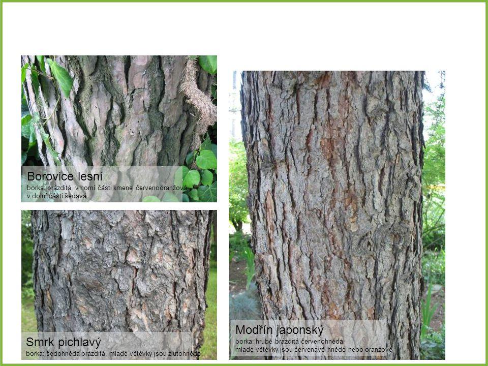 Borovice lesní borka: brázditá, v horní části kmene červenooranžová, v dolní části šedavá Smrk pichlavý borka: šedohnědá brázditá, mladé větévky jsou