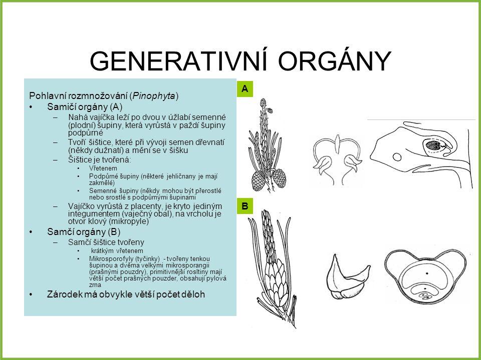 GENERATIVNÍ ORGÁNY Pohlavní rozmnožování (Pinophyta) Samičí orgány (A) –Nahá vajíčka leží po dvou v úžlabí semenné (plodní) šupiny, která vyrůstá v pa