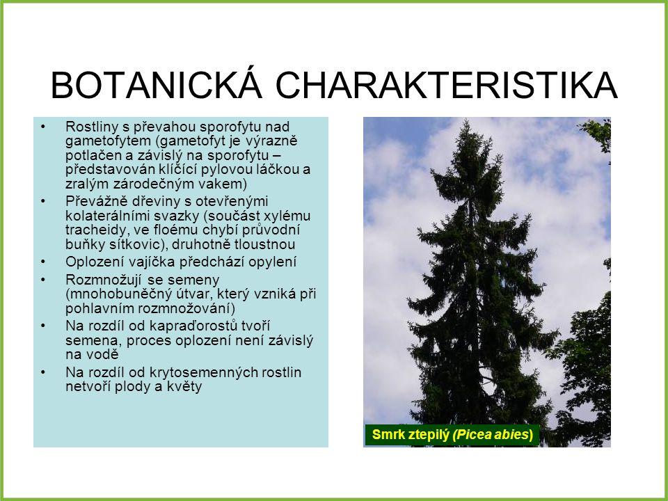 VEGETATIVNÍ ORGÁNY List –Obvykle stále zelené, vyměňují je v průběhu několika let –U jehličnanů je charakteristickým typem listu jehlice, která má několik anatomických zvláštností: Chybí rozlišení houbového a palisádového parenchymu Charakteristické jsou pryskyřičné kanálky Stonek –často dřevnatí, druhotně tloustne, jedná se převážně o stromy nebo keře –Charakteristické jsou pryskyřičné kanálky ve dřevě (Pinales) –Někdy listy vyrůstají ze zkrácených větévek tzv.