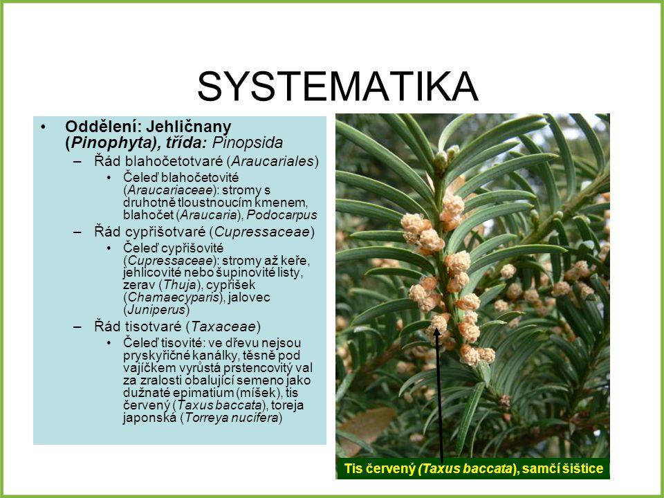 SYSTEMATIKA Oddělení: Jehličnany (Pinophyta), třída: Pinopsida –Řád blahočetotvaré (Araucariales) Čeleď blahočetovité (Araucariaceae): stromy s druhot