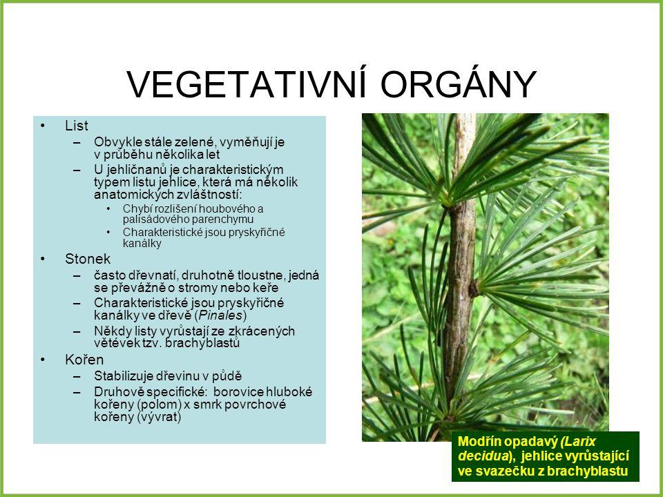 VEGETATIVNÍ ORGÁNY List –Obvykle stále zelené, vyměňují je v průběhu několika let –U jehličnanů je charakteristickým typem listu jehlice, která má něk