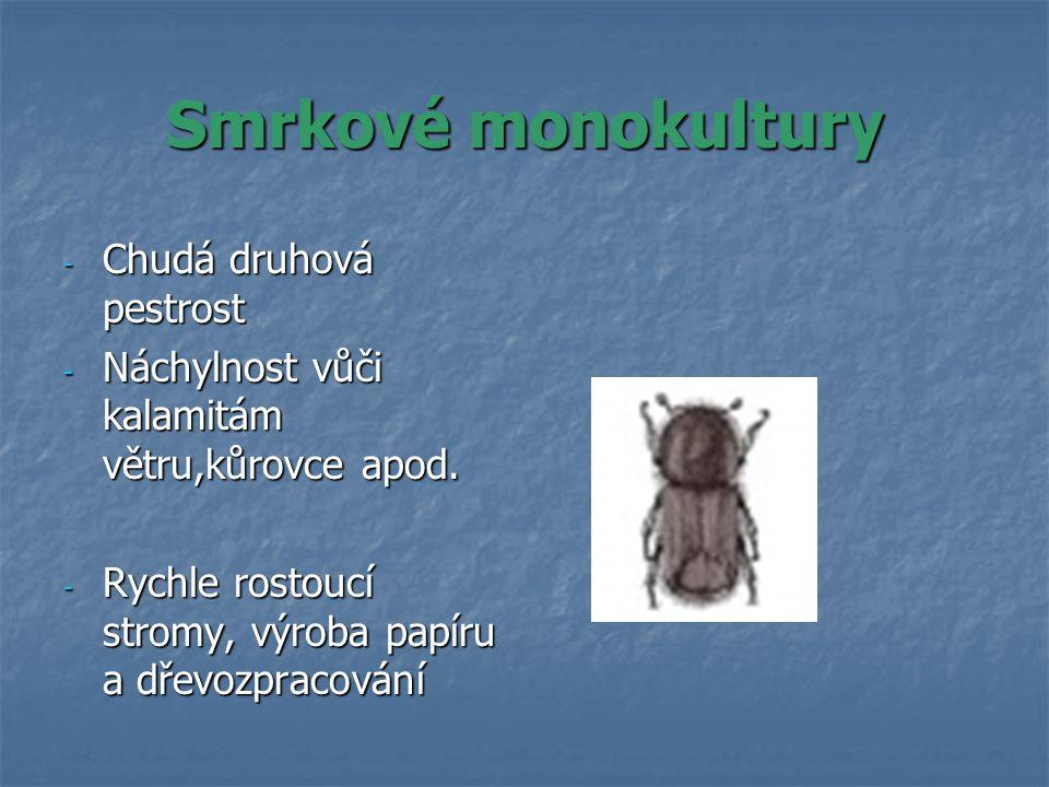 Smrkové monokultury - Chudá druhová pestrost - Náchylnost vůči kalamitám větru,kůrovce apod.