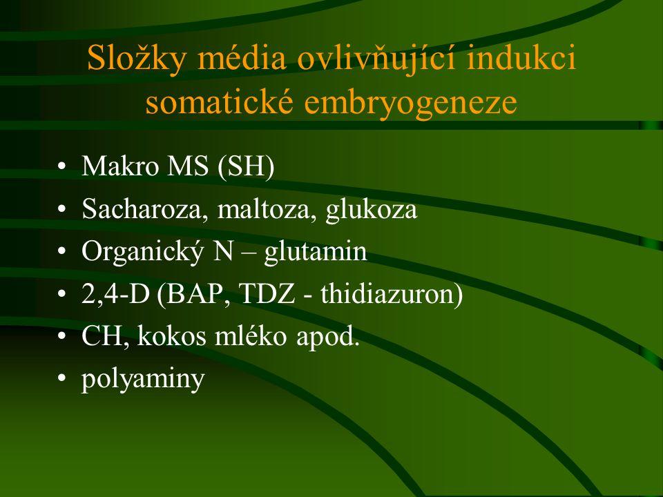 Složky média ovlivňující indukci somatické embryogeneze Makro MS (SH) Sacharoza, maltoza, glukoza Organický N – glutamin 2,4-D (BAP, TDZ - thidiazuron