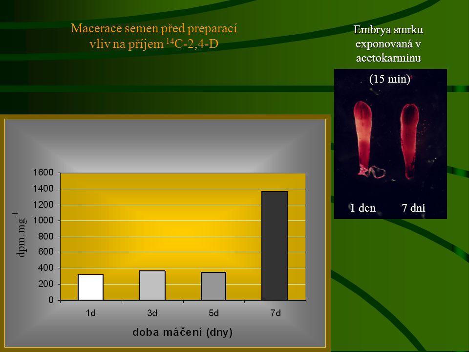 1 den 7 dní Embrya smrku exponovaná v acetokarminu (15 min) (15 min) Macerace semen před preparací vliv na příjem 14 C-2,4-D