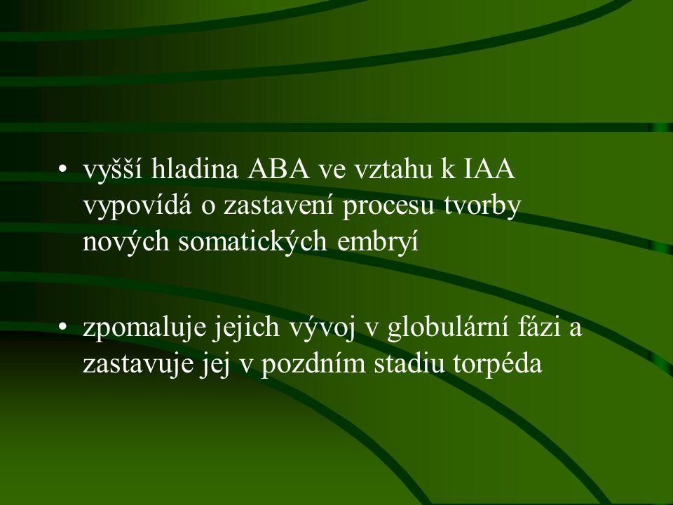 vyšší hladina ABA ve vztahu k IAA vypovídá o zastavení procesu tvorby nových somatických embryí zpomaluje jejich vývoj v globulární fázi a zastavuje j
