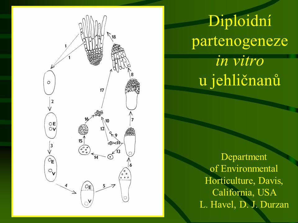 Diploidní partenogeneze in vitro u jehličnanů Department of Environmental Horticulture, Davis, California, USA L. Havel, D. J. Durzan