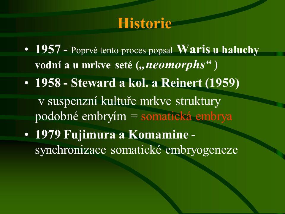 """1957 - Poprvé tento proces popsal Waris u haluchy vodní a u mrkve seté ( """"neomorphs"""" ) 1958 - Steward a kol. a Reinert (1959) v suspenzní kultuře mrkv"""