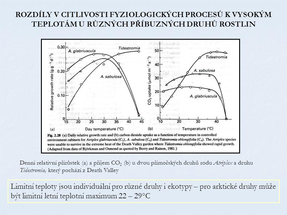 Denní relativní přírůstek (a) a příjem CO 2 (b) u dvou přímořských druhů rodu Atriplex a druhu Tidestromia, který pochází z Death Valley ROZDÍLY V CITLIVOSTI FYZIOLOGICKÝCH PROCESŮ K VYSOKÝM TEPLOTÁM U RŮZNÝCH PŘÍBUZNÝCH DRUHŮ ROSTLIN Limitní teploty jsou individuální pro různé druhy i ekotypy – pro arktické druhy může být limitní letní teplotní maximum 22 – 29°C
