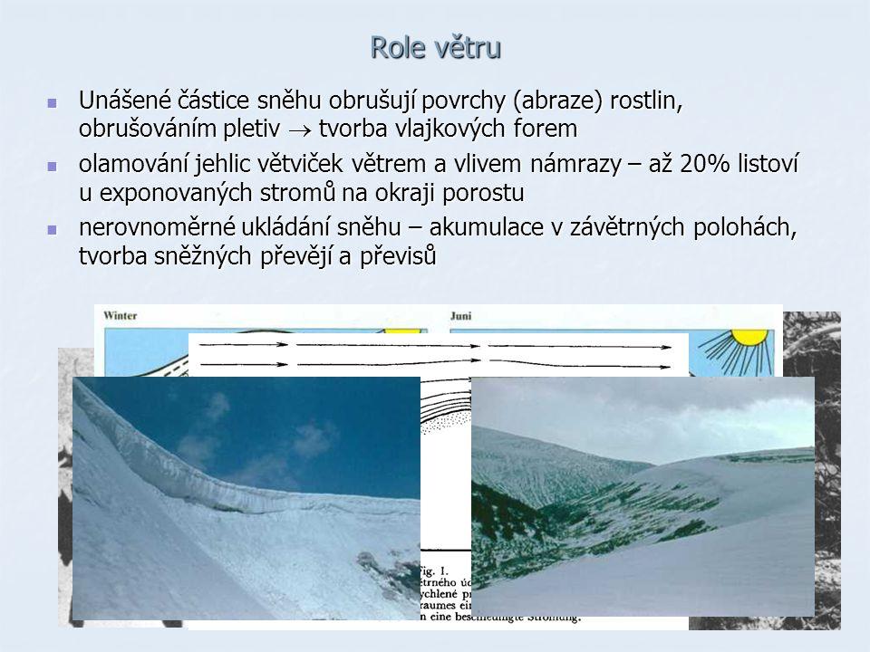 Role větru Unášené částice sněhu obrušují povrchy (abraze) rostlin, obrušováním pletiv  tvorba vlajkových forem Unášené částice sněhu obrušují povrchy (abraze) rostlin, obrušováním pletiv  tvorba vlajkových forem olamování jehlic větviček větrem a vlivem námrazy – až 20% listoví u exponovaných stromů na okraji porostu olamování jehlic větviček větrem a vlivem námrazy – až 20% listoví u exponovaných stromů na okraji porostu nerovnoměrné ukládání sněhu – akumulace v závětrných polohách, tvorba sněžných převějí a převisů nerovnoměrné ukládání sněhu – akumulace v závětrných polohách, tvorba sněžných převějí a převisů