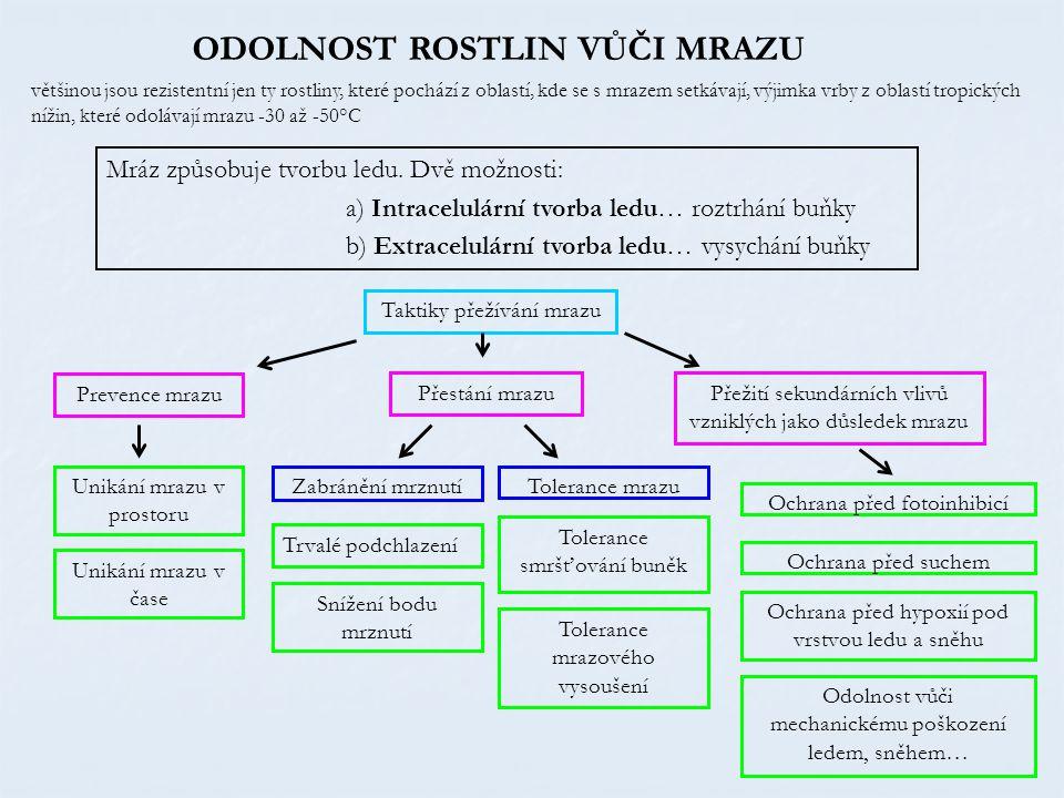 ODOLNOST ROSTLIN VŮČI MRAZU Mráz způsobuje tvorbu ledu. Dvě možnosti: a) Intracelulární tvorba ledu… roztrhání buňky b) Extracelulární tvorba ledu… vy